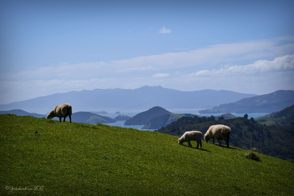 Coromandel View by yorkshirekiwi