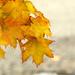 Autumn by gq