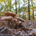 Wide Angle Mushrooms by leonbuys83