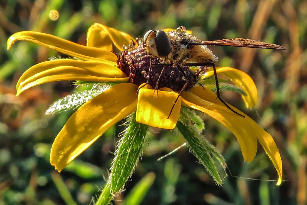 One Wet Bee by milaniet