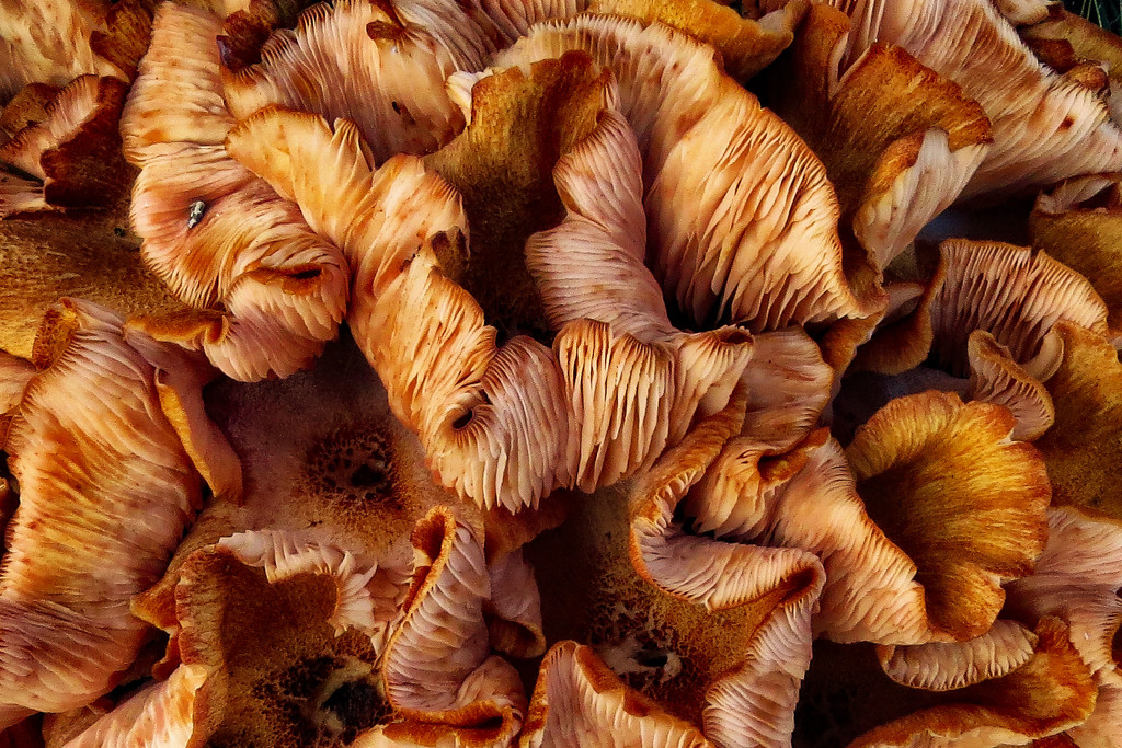 Another Mass of Fungi by milaniet