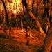 Ravaged Forest
