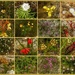 So many new wild flowers after the fire...........