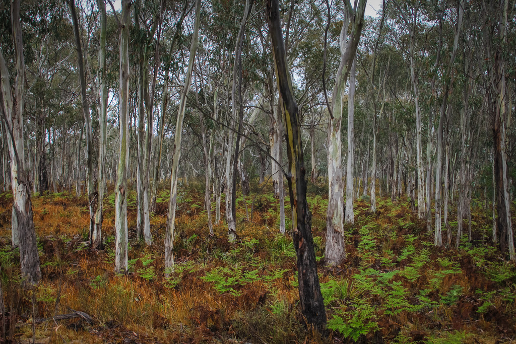Painted Forest by purdey