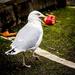Even Seagulls....... by swillinbillyflynn