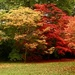 Acer Glade Fire by phil_sandford