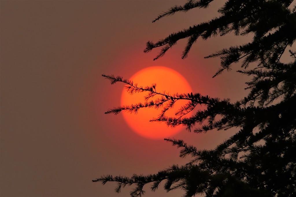 Sahara Sun. by carole_sandford