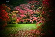 16th Oct 2017 - Westonbirt  Arboretum