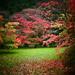 Westonbirt  Arboretum by carole_sandford