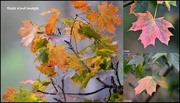 17th Oct 2017 - Autumn leaves