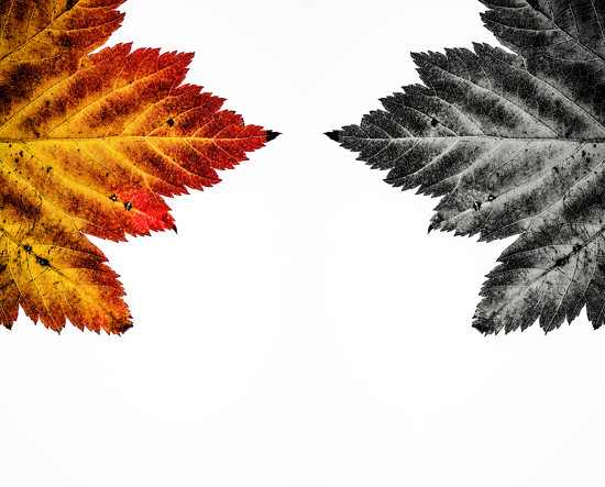 Leaf by kwind