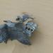 Plane Wreck - P51 Mustang