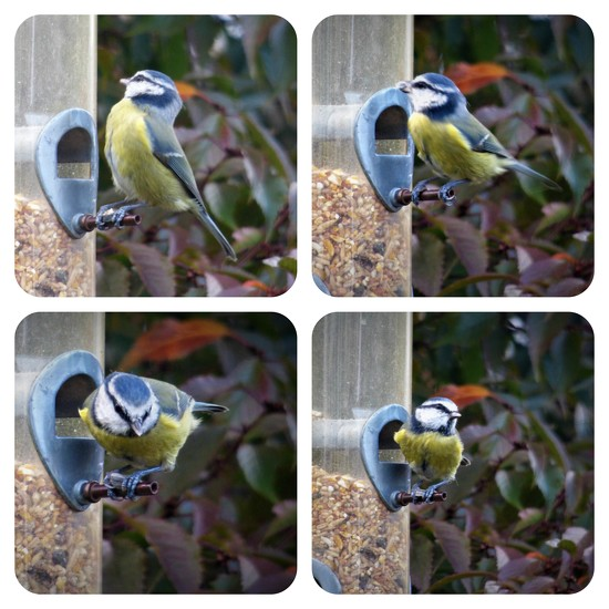 Busy at the feeder  by beryl