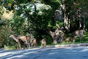 14th Oct 2017 - Deer, deer, deer, deer, deer, deer......