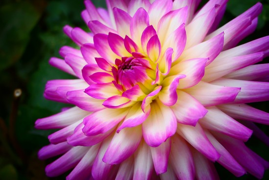 Pretty in Pink by carole_sandford