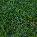 Green Grass ~
