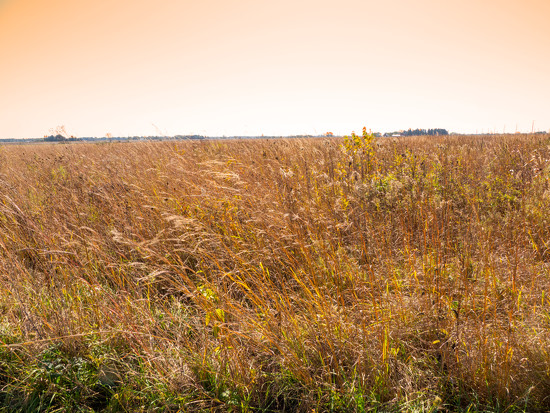Prairie Grass Landscape by rminer