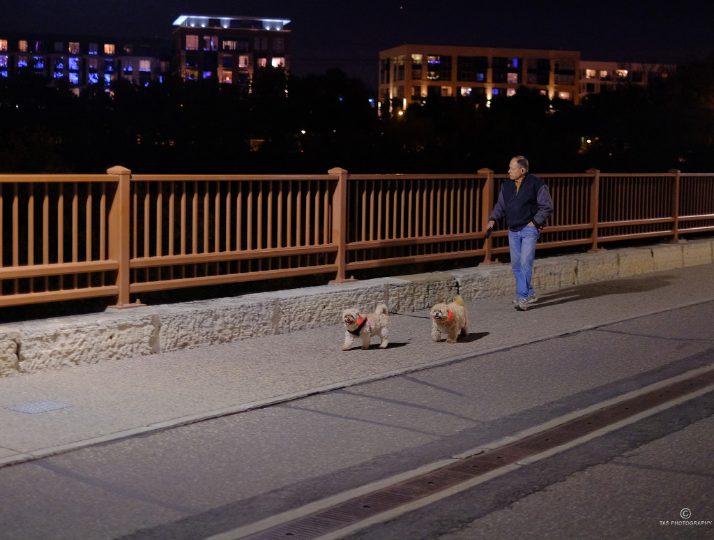 Walking the Dogs by tosee