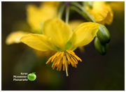 19th Oct 2017 - Yellow flower close-up