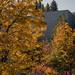 Fall Foliage in Utah
