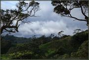 20th Oct 2017 - Awhitu Peninsula