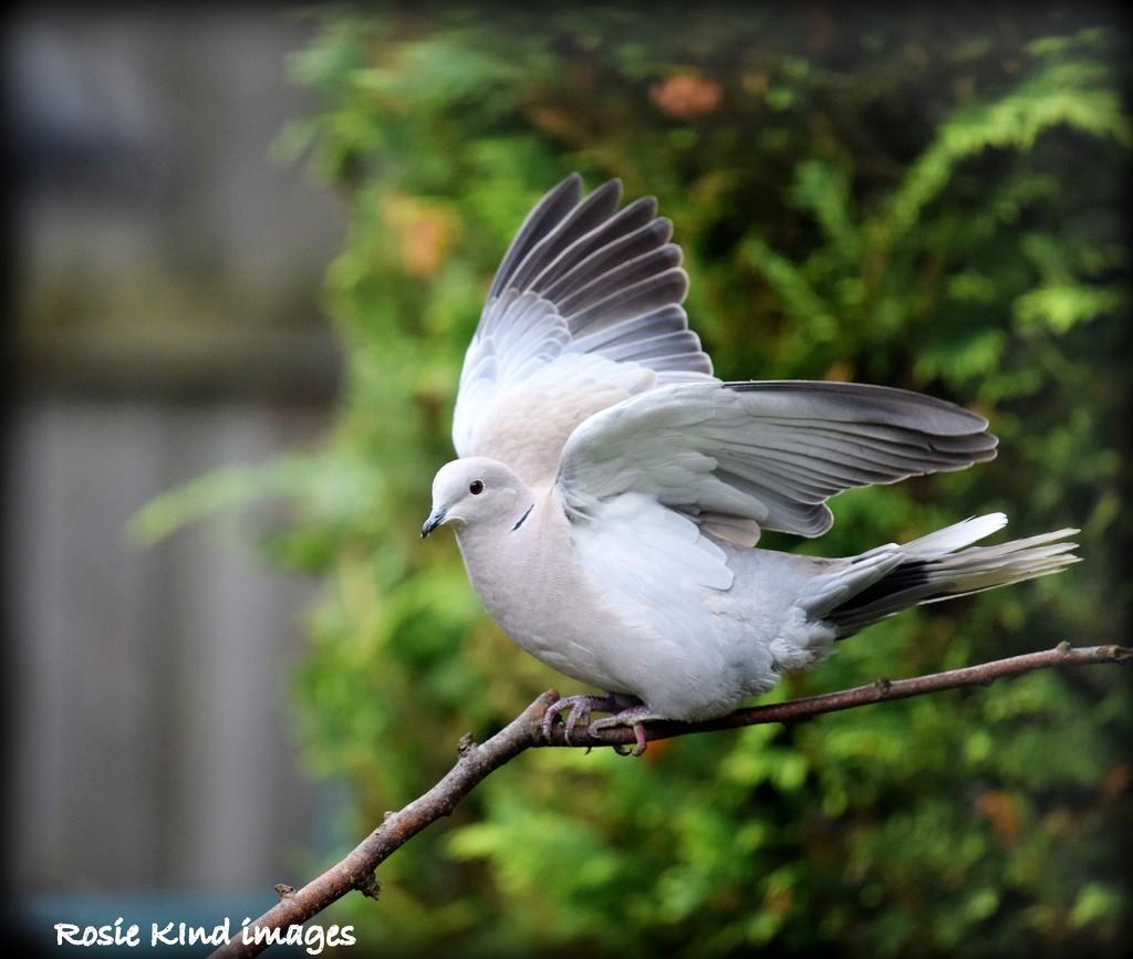 Ready to fly by rosiekind
