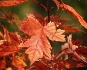 19th Oct 2017 - Autumn Blaze