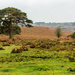 New forest Moors