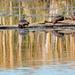 Turtle Landscape Closeup