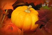 20th Oct 2017 - Autumn pumpkin