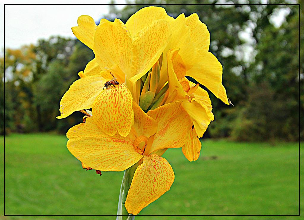 Bee Glad by olivetreeann