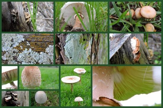 Mushrooms, Fungi, Lichen by ubobohobo