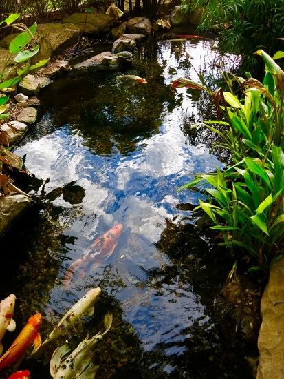 The Koi Pond in Grapevine by louannwarren