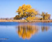 19th Oct 2017 - Grabel Pond reflection