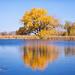 Grabel Pond reflection