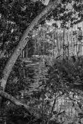 21st Oct 2017 - Ancient Florida