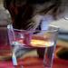 just for fun: Edu-cat-ion