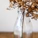 hydrangea frizz by pistache