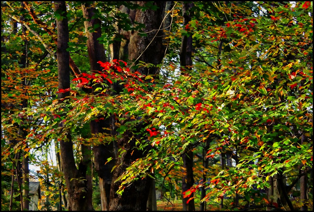 Impressions of Fall by olivetreeann