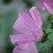 Shades of Pink and Sage