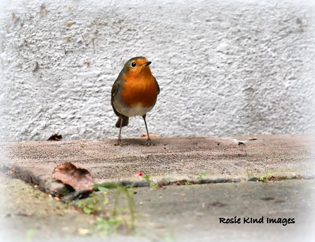Following me in the garden by rosiekind