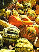 23rd Oct 2017 - Gourds