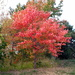 In it's autumn glory