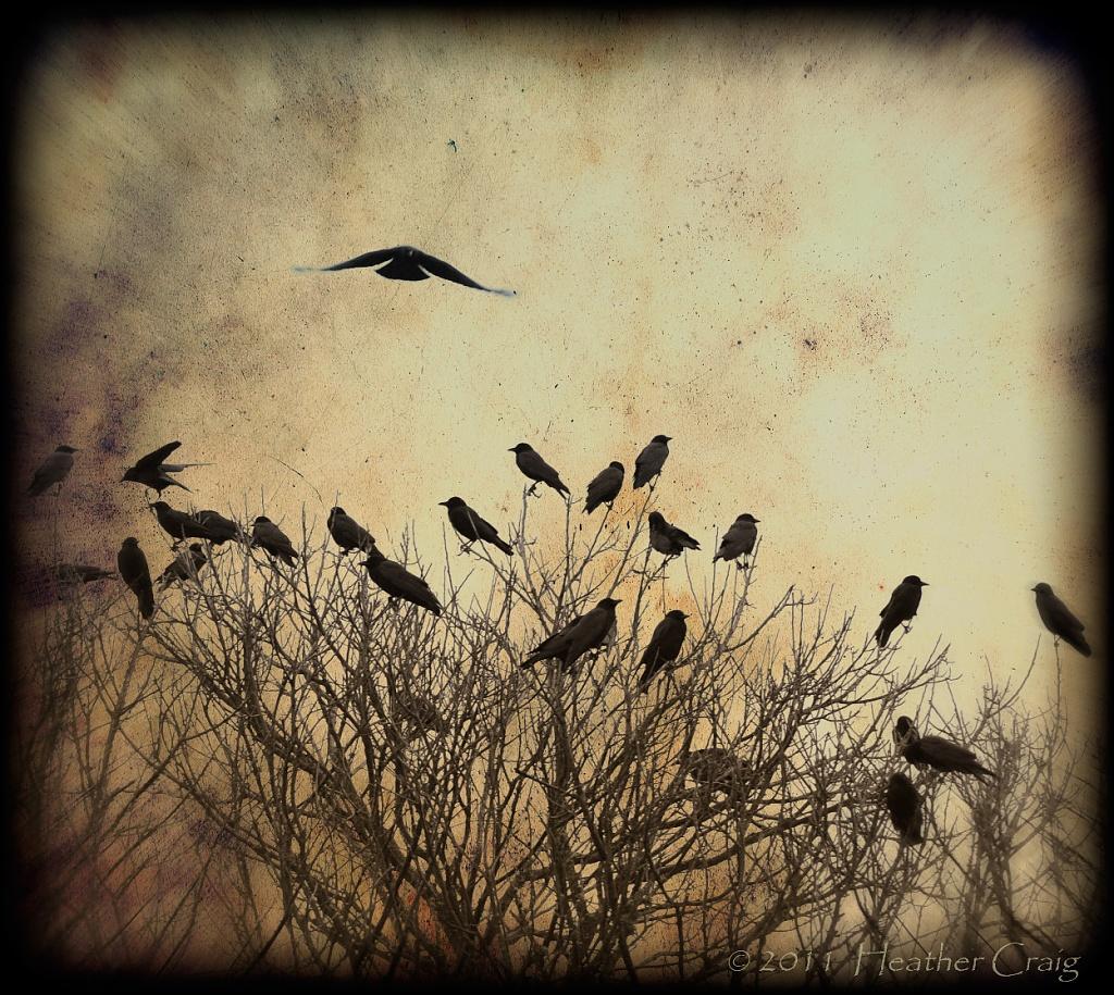 crows too by pixelchix