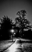 24th Oct 2017 - Evening path...