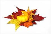 24th Oct 2017 - Fall has fallen