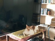 22nd Oct 2017 - The cat on the TV table.