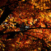 Fall Lite by nanderson