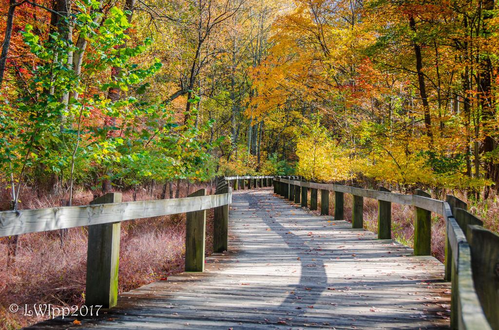 Fall Walking  by lesip