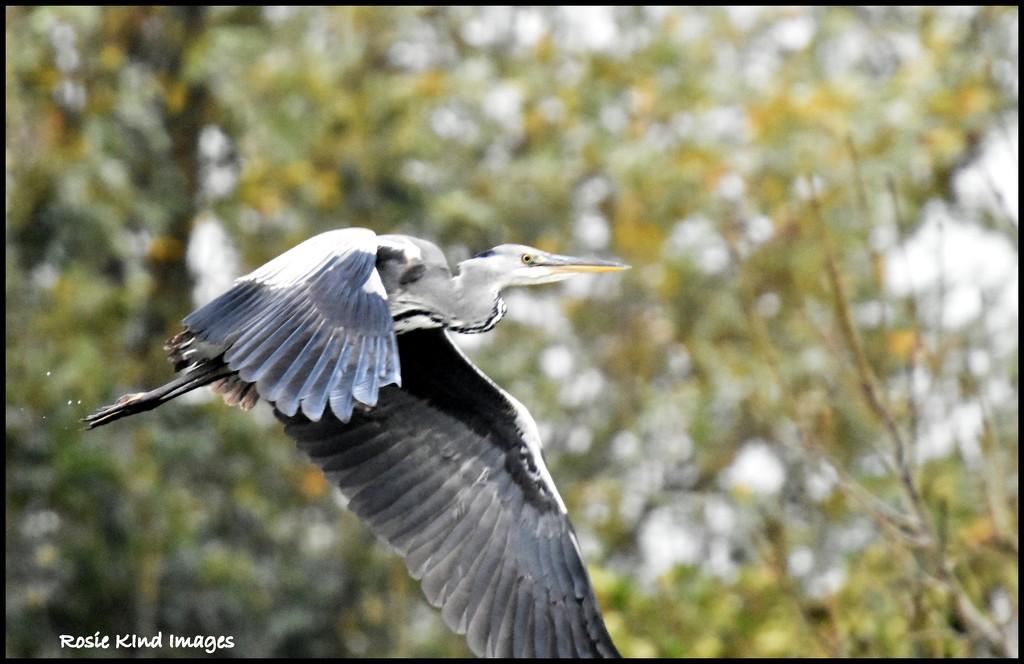Mr Heron by rosiekind